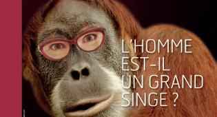 Expo : L'Homme est-il  un grand singe ?