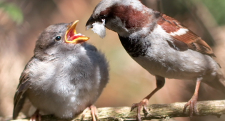 Nourrir les oiseaux à la mauvaise saison…