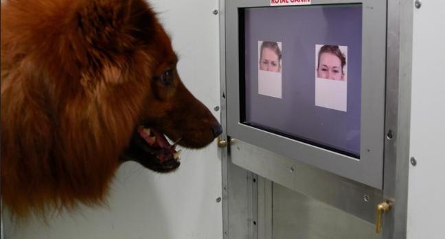 Souriez, votre chien sait ce que ça veut dire