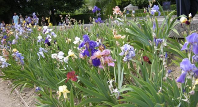 Les fleurs font leur cinéma à Auvers-sur-Oise